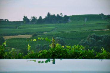 Zwembad met uitzicht over de wijngaarden