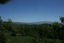 Uitzicht op de groene omgeving
