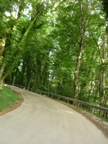 italiainpiega-pieghe meravigliose-itinerari-moto-sud-italia-gargano-foresta umbra 3