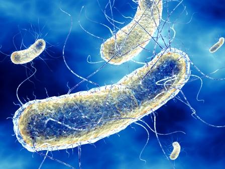 escherichia coli 0001 In futuro i batteri potrebbero essere usati per conservare tutti i nostri dati