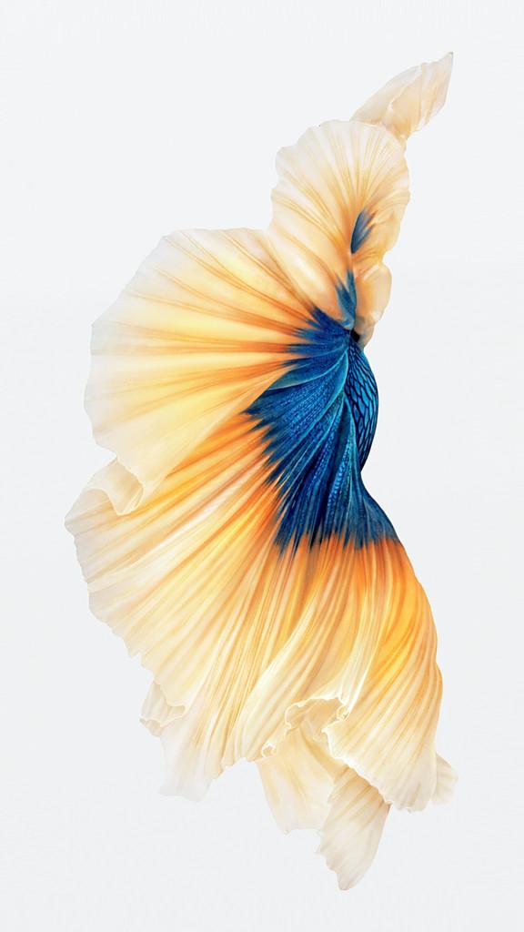 iphone 6s fish gold wallpaper 576x1024 I nuovi sfondi di iPhone 6S disponibili al download per tutti