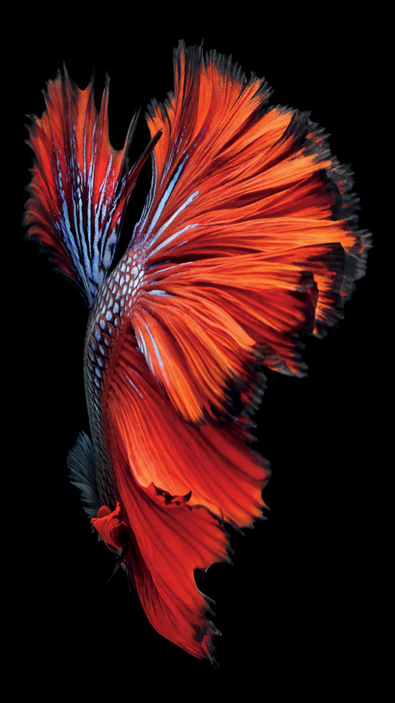 iphone 6s fish red wallpaper 576x1024 I nuovi sfondi di iPhone 6S disponibili al download per tutti