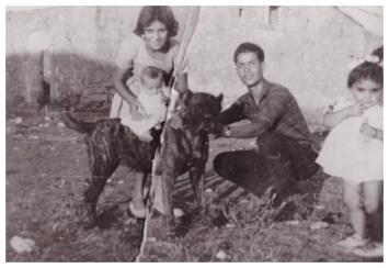 Fam. Denaro, 1958, Sicilia. Ebro, campione di lotta e vincitore di più di 30 incontri. Cani chiamati CUR SICEDDI, di scorta ai carrettieri.