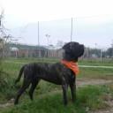 Foto del profilo di Domenico73