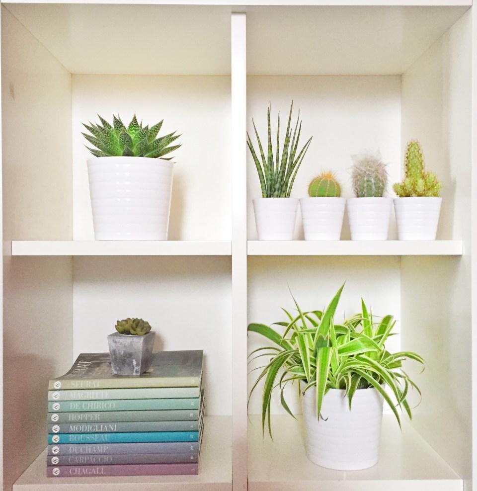 #plantshelfie #urbanjunglebloggers