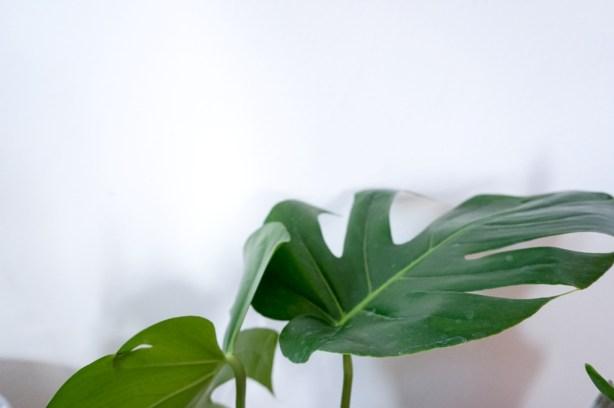spring-restyling-green-corner-officina-essenze-italianbark-25