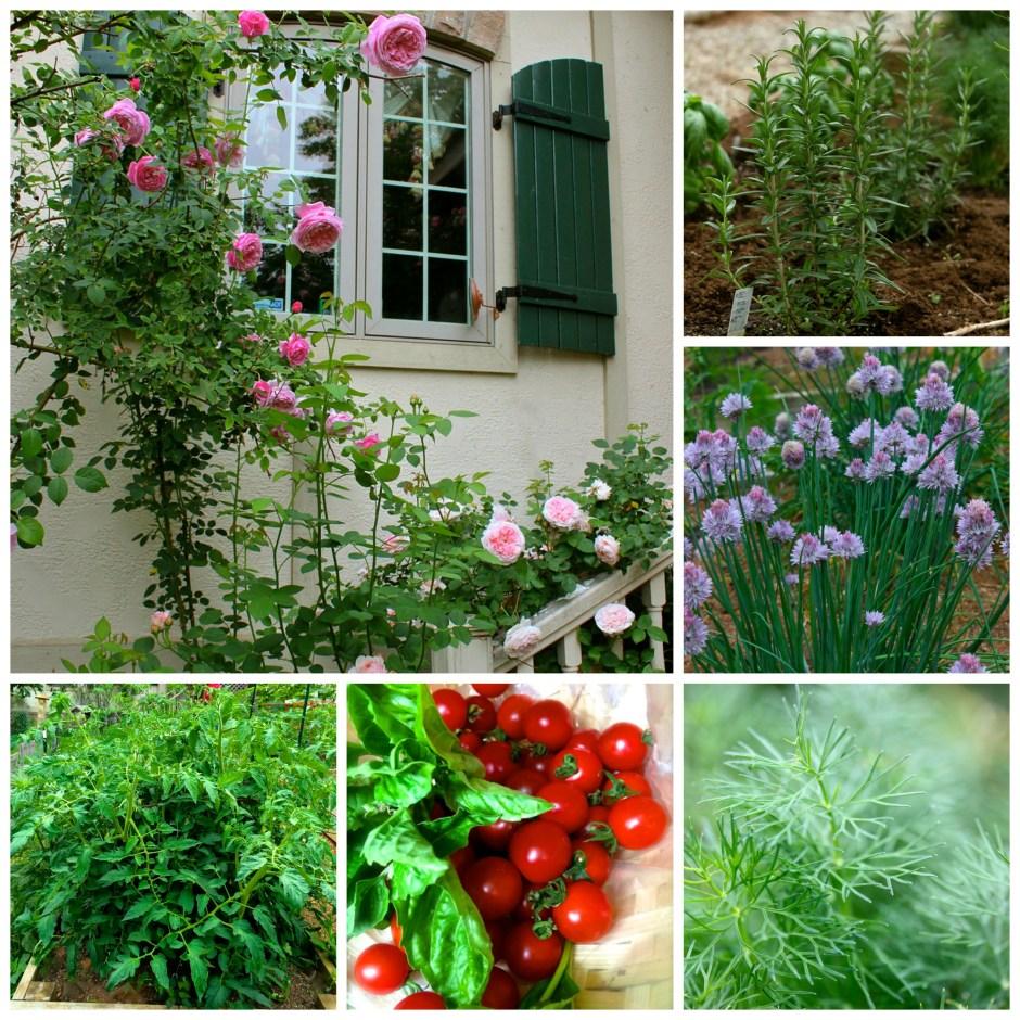 Kitchen Garden Pics: Fresh Italian Green Bean Salad & A Kitchen Garden