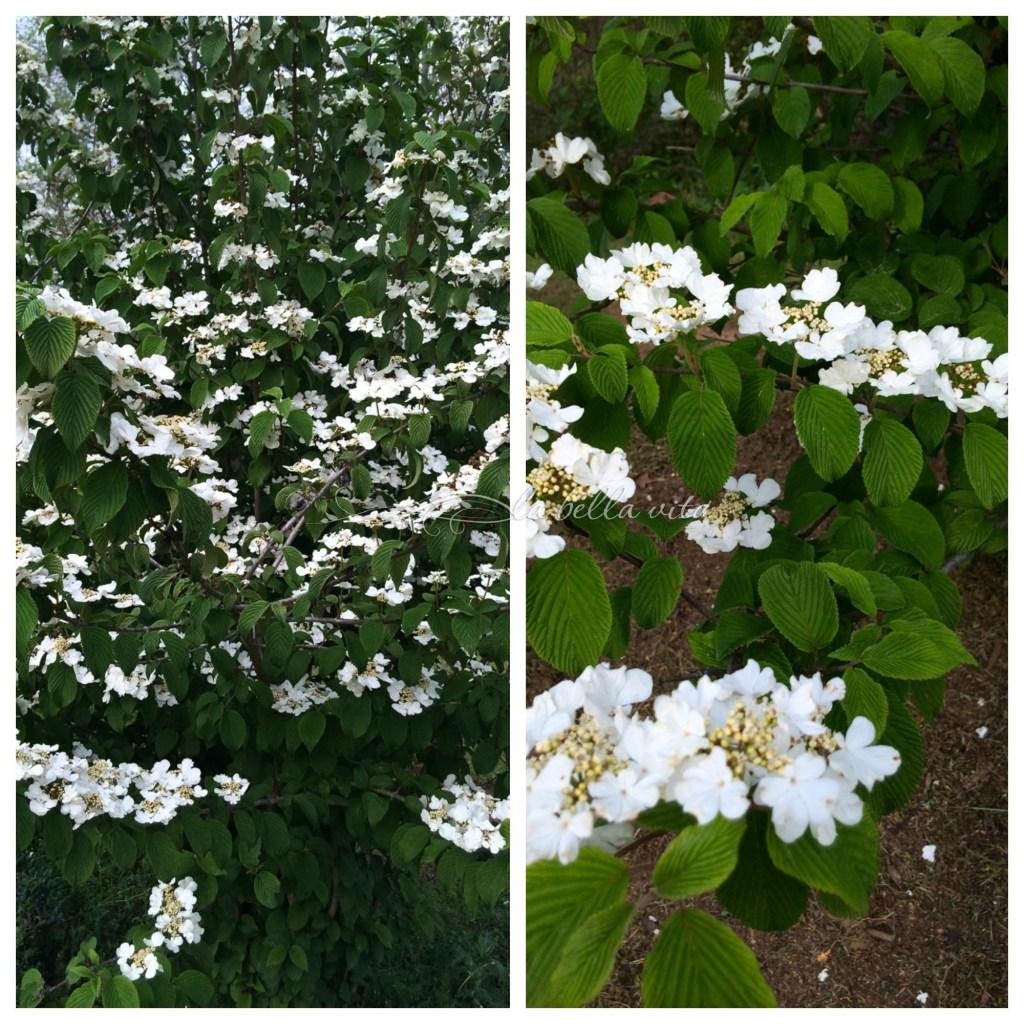 spring garden bloomfest