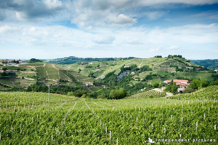 06_Vespa-tour-weeding-in-Langhe