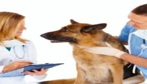 assistenza-medica-per-cani-e-gatti-con-la-mutua_1138791 - www-it-blastingnews-com - 350X200