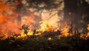 Incendio - www-cinquequotidiano-it - 350X200