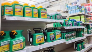 A man shows bottles of 'Roundup' wich contains glyphosate in a garden store in Brussels, 23 October 2017. Members of the EU Parliament (MEPs) on 24 October 2017 are to vote on a draft resolution calling for a phasing out of the herbicide glyphosate and its total ban by 2020. The herbicide glyphosate is an active ingredient in Roundup. ANSA/STEPHANIE LECOCQ