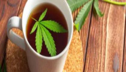 Marijuana - Cannabis - 1525004153-marijuana - www-ilgiornale-it - 350X200
