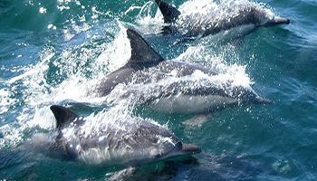 Con l'Italia ferma, nei porti italiani, senza l'inquinamento delle navi, arrivano i delfini