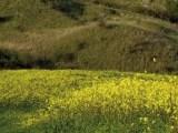 Montepulciano, Toscana ovunque bella)