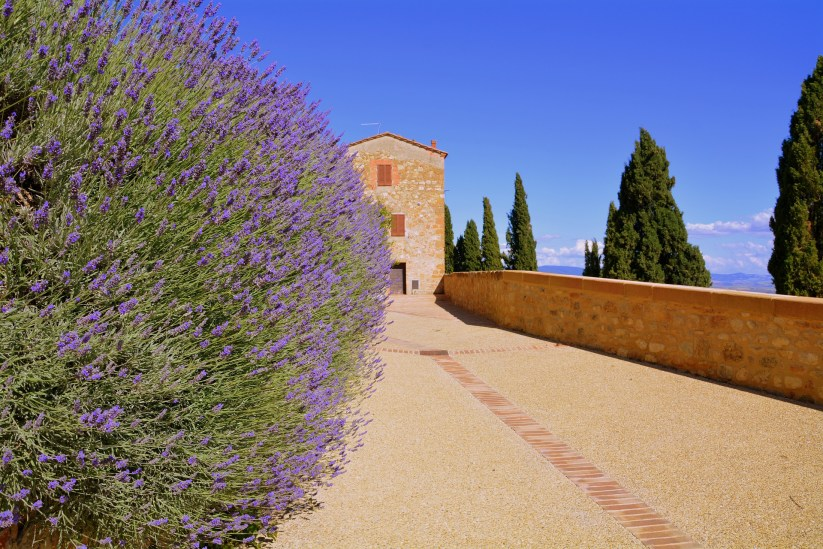Lavanda in Toscana (ph. Gianni Crestani / Pixabay).