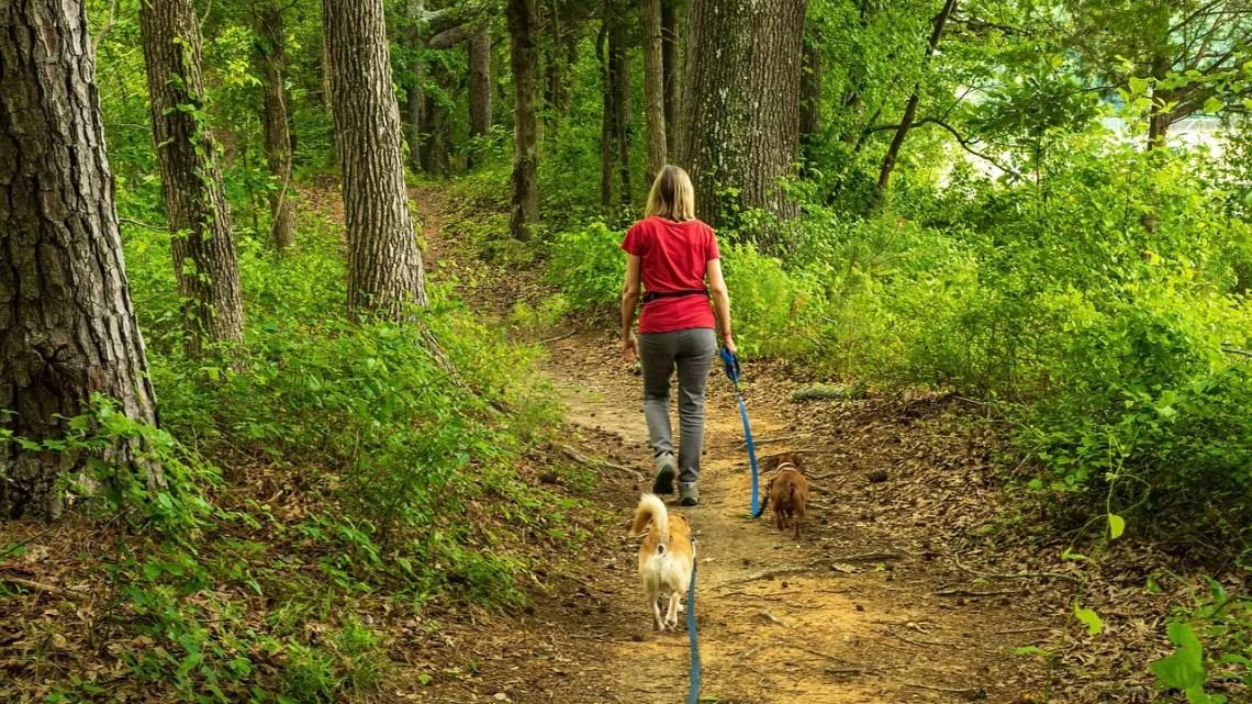 cani a rischio in primavera Foto di wileydoc da Pixabay