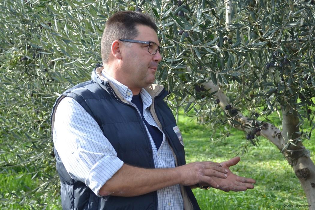 Olijfolieproducent Domenico