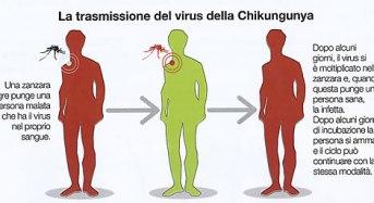 Un bambino prima vittima del virus chikungunya in Colombia. In Italia segnalato a Bologna caso turista infettato