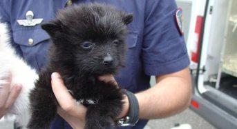 La Polizia di Stato stronca l'ennesimo traffico di animali