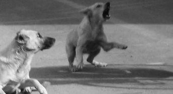 Responsabilità per danni causati da cani randagi: Il Comune risponde dei danni