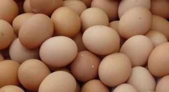 Scandalo uova al fipronil. Il Ministero salute pubblica i chiarimenti sulla situazione nel Nostro Paese