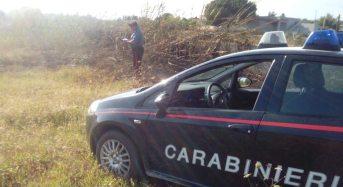 Ruba 70 kg. di melograni da un terreno, arrestato dai Carabinieri