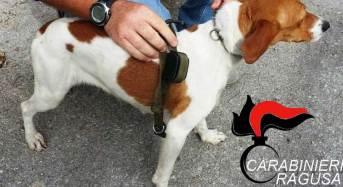 Collare elettrico al cane da caccia, carabinieri denunciano monterossano