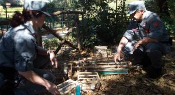 Contrasto al traffico illecito di fauna selvatica: Sequestrati 42 cardellini, denunciato un palermitano