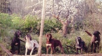 Chiaramonte Gulfi. Cani randagi in abitazione privata, dopo un mese e mezzo il caso finisce sul tavolo della Procura della Repubblica