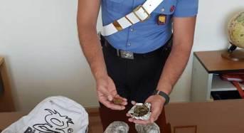Pozzallo. Blitz antidroga dei Carabinieri, arrestato 17enne per spaccio