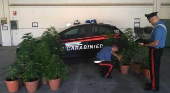 Sassari. Coltiva marijuana sul terrazzo di casa