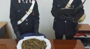 Pozzallo. La pescheria della droga: arrestati padre e figlio dai Carabinieri con 1 chilo di droga
