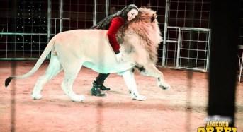 Per la prima volta nel Salento il Circo Amedeo Orfei. Show a Lecce dal 23 dicembre al 7 gennaio