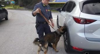 Guardia di finanza Catania: intensificati i controlli delle fiamme gialle con l'ausilio delle unità cinofile