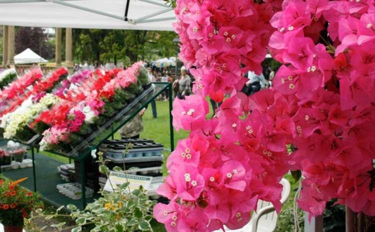 Eventi a Firenze Mostra mercato primaverile di piante e fiori