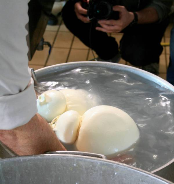 Caciocavallo making in Irpinia - Italy