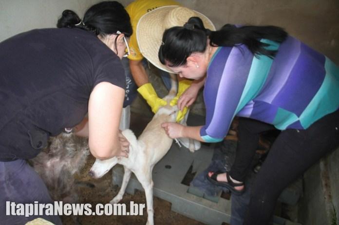 Veterinária e voluntários atuaram na vacinação