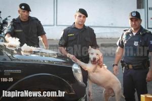Maradona em uma das ocorrênias da GCM; cão farejador é conhecido pela eficácia (Arquivo)
