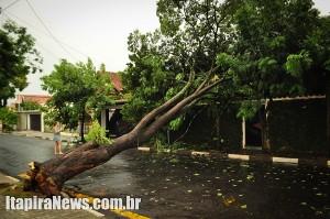 Árvore de grande porte tombou em cima de residência na Bela Vista
