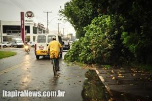 Árvores cederam em diversos pontos da cidade