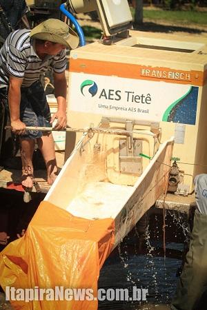 AES Tietê vai soltar mais peixes na represa (Arquivo)