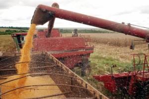 Milho, soja e trigo ajudaram em crescimento de estimativa (Arquivo/Agência Brasil)