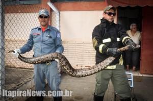 Cobra foi recolhida por Assis e Eduardo e devolvida à natureza