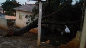 Árvore caiu sobre residência na Vila Ilze (Dalyla Vanessa/Divulgação)