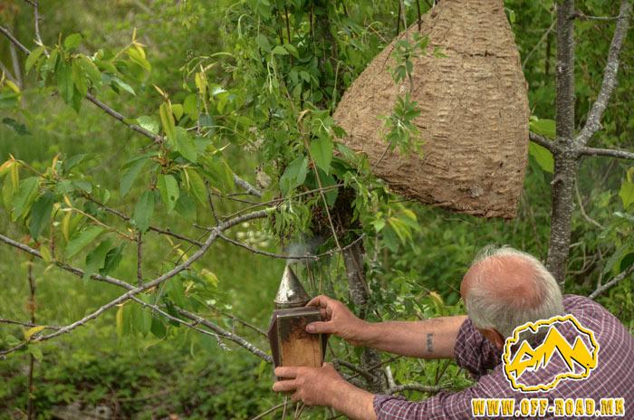 Фаќање на рој пчели – село Градешница, Мариово – 24.05.2019