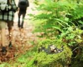 Camminare nel bosco: consigli utili per principianti