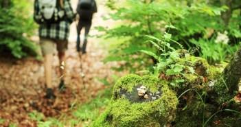 Camminare nel bosco gambe