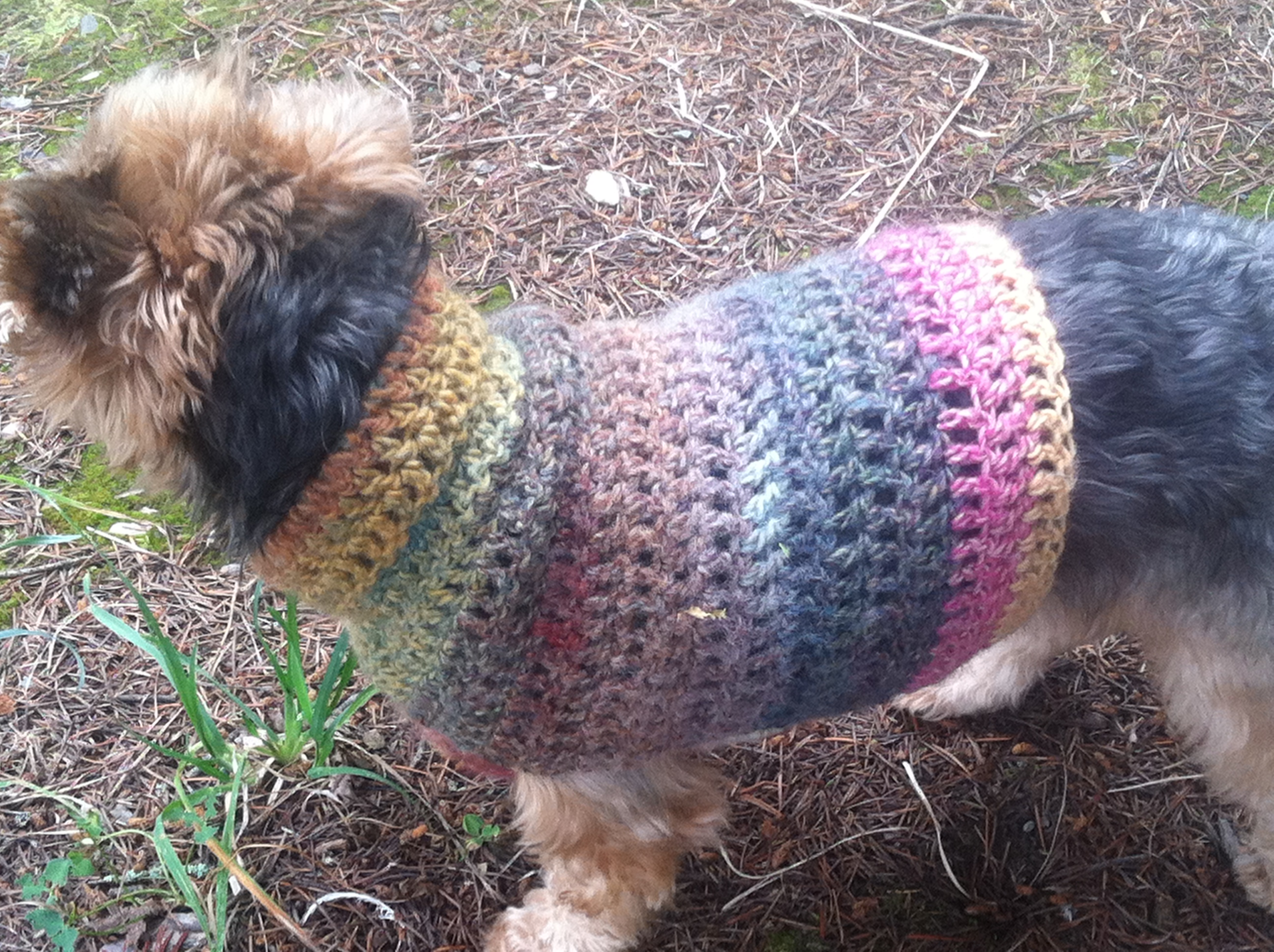 Free quick and easy small dog crochet sweater itchin for some back part of dog sweater close up of crochet dog coat itchinforsomestitchin bankloansurffo Image collections