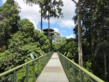 Canopy walkway in the Rainforest Discovery Centre, Sepilok, Malaysia